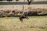 UpDog Challenge Disc Games -By the Australian Working Dog Rescue